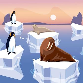 Foca-morsa e pinguins em pé no iceberg do pólo norte