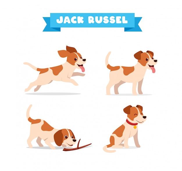 Fofo jack russel cão animal animal de estimação com muitas poses conjunto