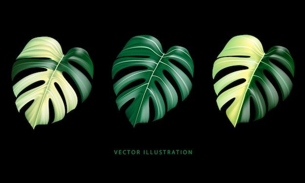 Folha da planta monstera deliciosa realista das florestas tropicais verde amarelo coleção manchada preta