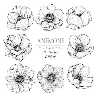 Folha de anêmona e desenho de flor