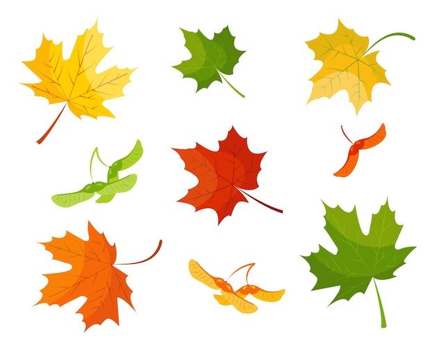 Folha de bordo e sementes nas cores vermelhas, amarelas e verdes isoladas.