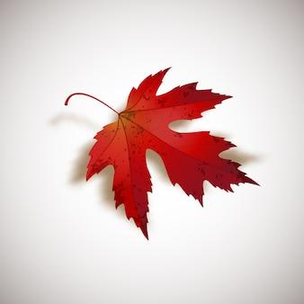 Folha de bordo vermelho