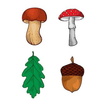 Folha de cogumelo e carvalho