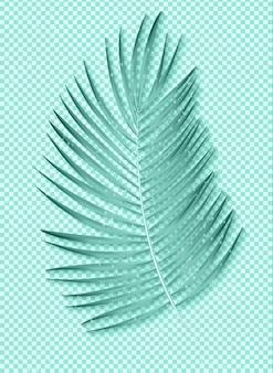 Folha de palmeira bonita no fundo transparente.