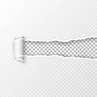 Folha de papel quadriculada transparente rasgada
