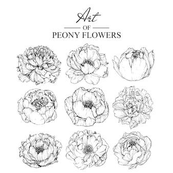 Folha de peônia e desenhos de flores. vintage mão ilustrações botânicas desenhadas. vetor.