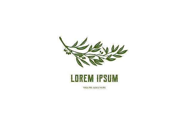 Folha de ramo de eucalipto verde para óleo natural, logotipo de produto em vetor
