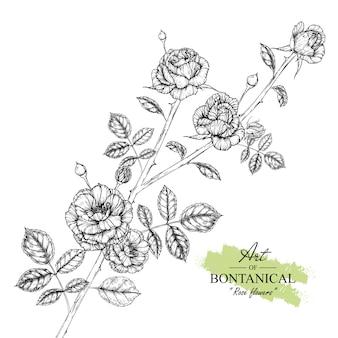 Folha de rosa e desenhos de flores.