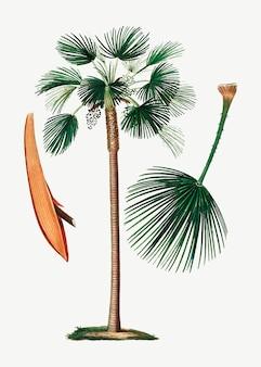 Folha de ventilador de palma