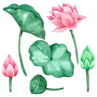 Folha e flor de lótus conjunto pintura à mão em aquarela