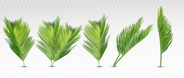 Folha exótica tropical de diferentes ângulos. folhas de palmeira realista 3d em fundo transparente. conjunto de ícones. ilustração