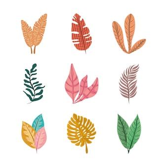 Folha tropical deixa folhagem natureza decoração ícone conjunto ilustração design plano
