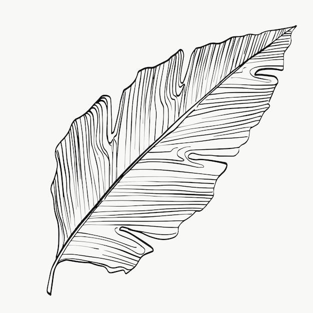 Folhagem calathea folha tropical exótica linha arte abstrata plantas modernas ou mínimas linha perfeita