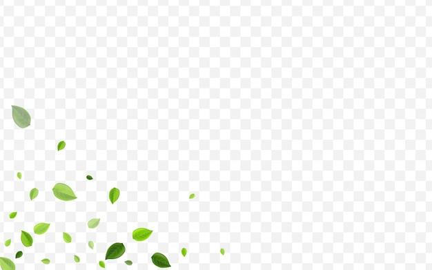 Folhagem de hortelã. vento folha verde