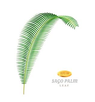 Folhagem tropical da palmeira sagu e botânica exótica