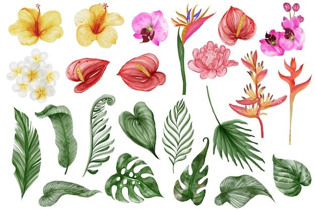 Folhagem tropical de verão e flor isolada clip-art aquarela