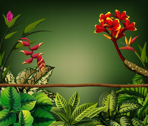 Folhas ao redor e ramo