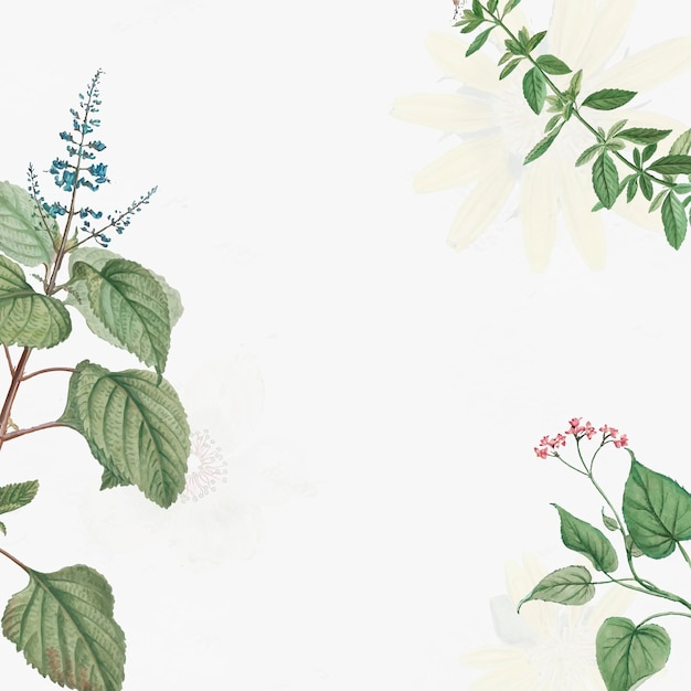 Folhas botânicas antigas