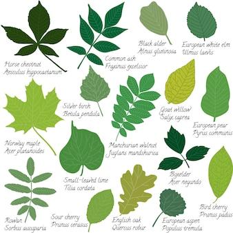 Folhas coleção