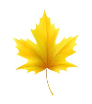 Folhas da folha de bordo amarela do outono. ilustração vetorial eps10