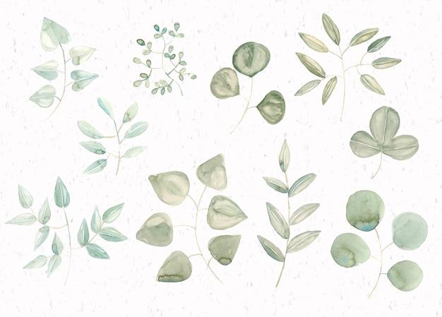 Folhas de aquarela