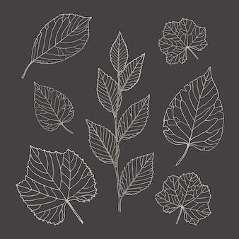 Folhas de arte de linha. conjunto decorativo botânico de folhas de árvores