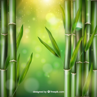 Folhas de bambu vetor