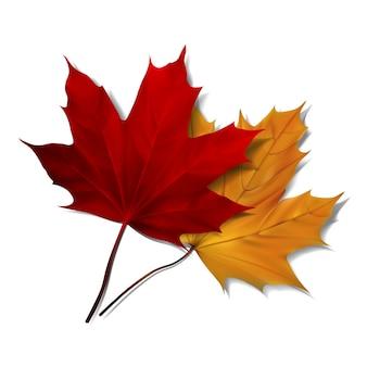Folhas de bordo vermelho e laranja realista sobre fundo branco. ilustração eps10