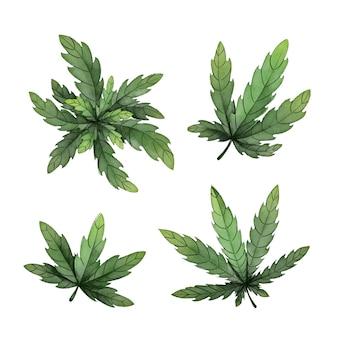 Folhas de cannabis botânica em aquarela