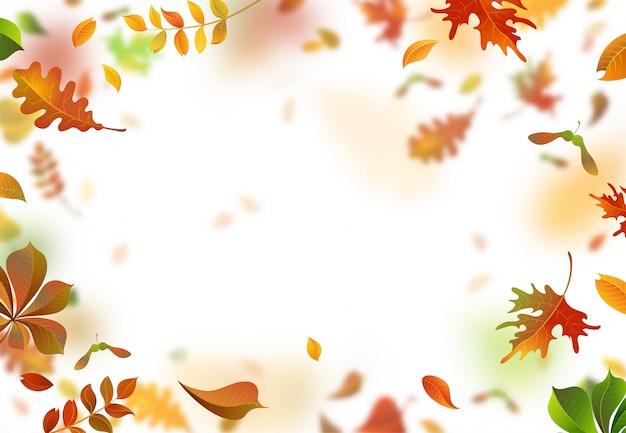 Folhas de carvalho, sorgo, bordo e castanheiro caindo do quadro