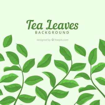 Folhas de chá de fundo com plantas diferentes