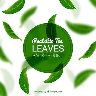 Folhas de chá de fundo com plantas