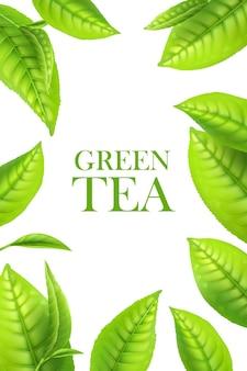 Folhas de chá verde, fundo orgânico de ervas. quadro de vetor para publicidade de bebidas com folhas verdes 3d. modelo de design de pôster realista com borda de folhas macro, planta fresca para bebida de aroma natural