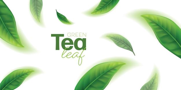 Folhas de chá verde realistas
