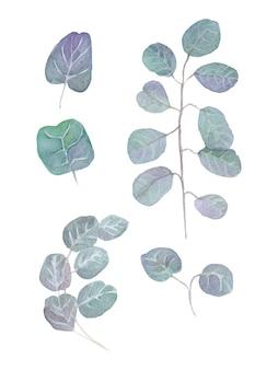 Folhas de eucalipto em aquarela e ramos. pintados à mão bebê e eucalipto dólar de prata