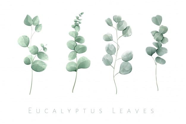 Folhas de eucalipto isolado em aquarela em um conjunto de 4 ramos.