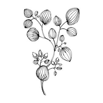Folhas de eucalipto.