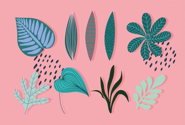 Folhas de folhas tropicais diferentes ramos natureza botancial ícones