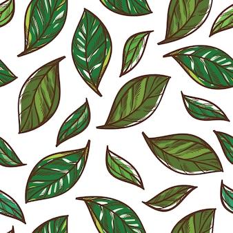 Folhas de hortelã aromáticas para temperar padrão sem emenda ou ervas e especiarias