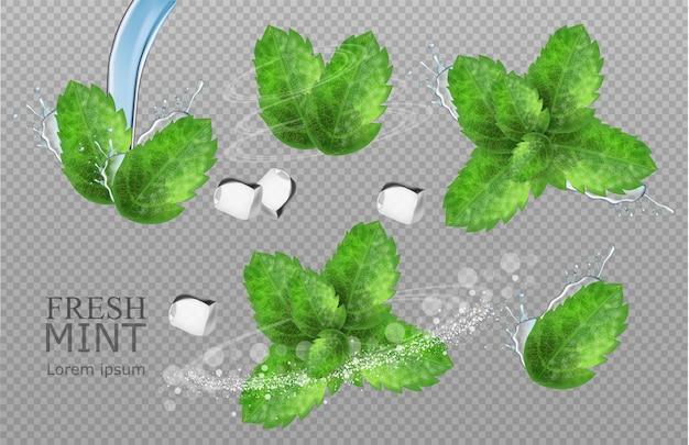 Folhas de hortelã realista