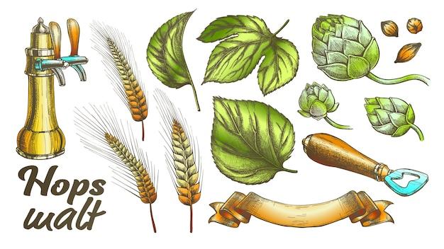 Folhas de lúpulo de cor cevada trigo centeio abridor de orelha definido.