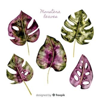 Folhas de monstera aquarela