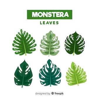 Folhas de monstera