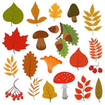 Folhas de outono amarelas, cogumelos e bagas.