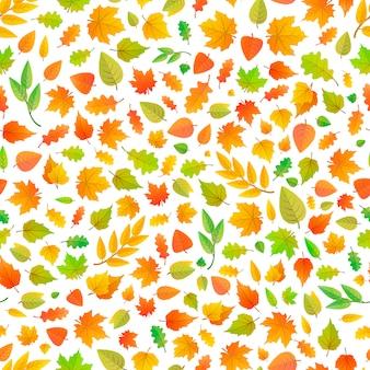 Folhas de outono bonitos de diferentes tipos de árvores