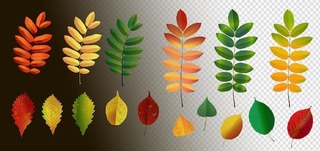 Folhas de outono caindo isoladas em fundo transparente. ilustração vetorial. folhas realistas de outono