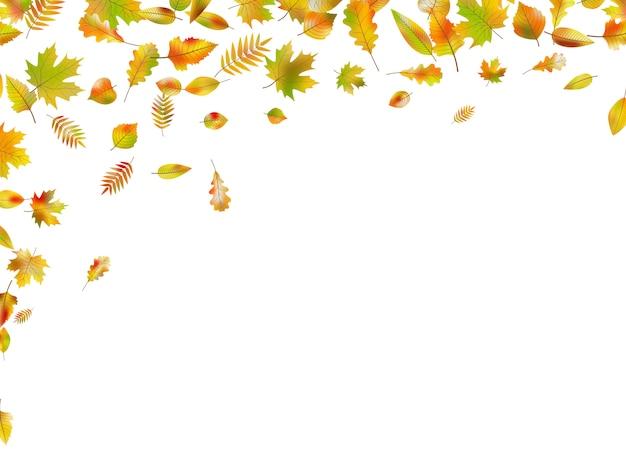 Folhas de outono caindo.