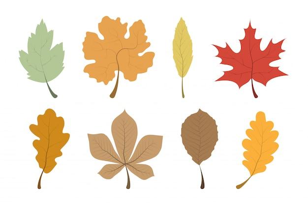 Folhas de outono. coleção de folhas. folhas de outono do modelo em uma fileira.