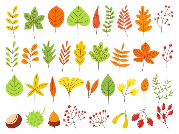 Folhas de outono coloridas. conjunto de folhas amarelas outonais, floresta natureza laranja e folhas vermelhas de setembro