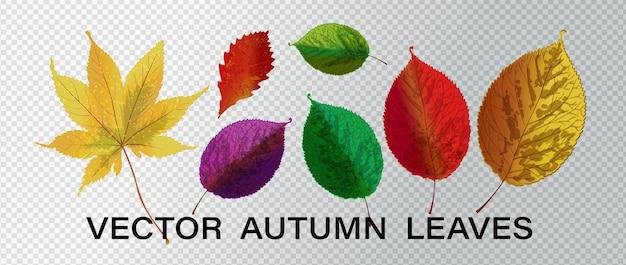 Folhas de outono coloridas em branco. conjunto de folhas de outono coloridas. ilustração vetorial.